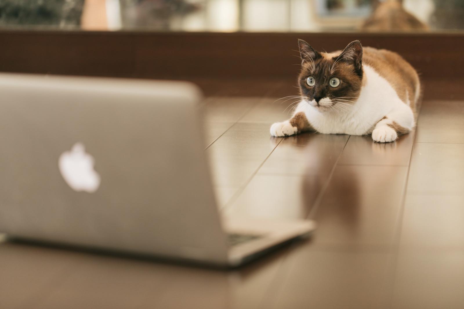 パソコンの動作が重い原因の調べ方!【改善・解消の対処方法はこれです】