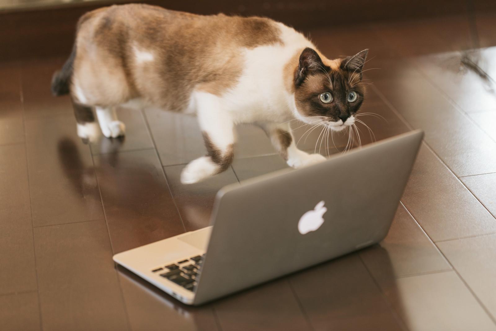 ブログのサイドバーに人気記事を載表示させない方が良い理由